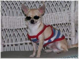 Tuffy with sunglasses