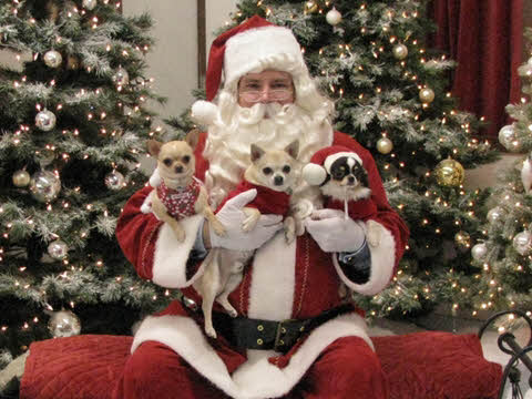 Sierra, Tuffy, Sugar Ray and Santa 2009
